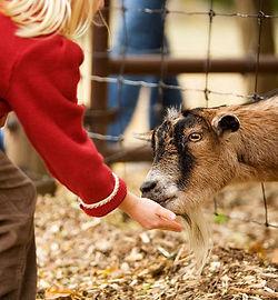 petting zoo feed.jpg