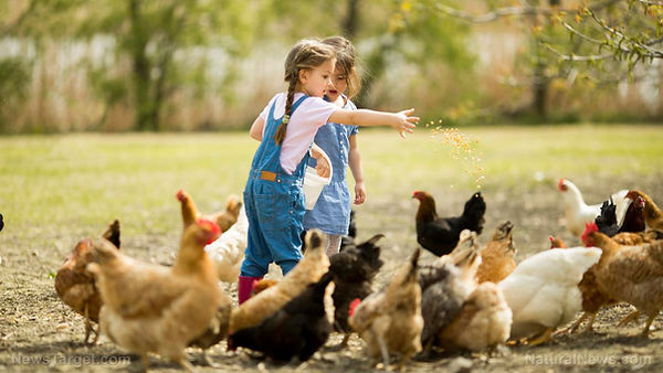 kids and chickens.jpg