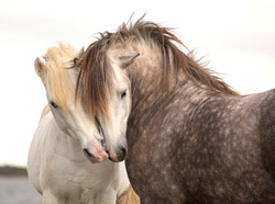 Horses_Two_Snout_471328.jpg Facebook Logo 2018 01.jpg 02.jpg 03