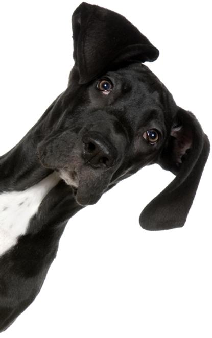 Alternative Tierarztpraxis