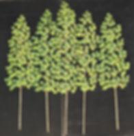ASPEN-GREEN-BRANCH.jpg