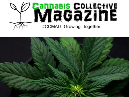 The Up-Trend: Grow Light Science LLC - Interview with Founder/CEO