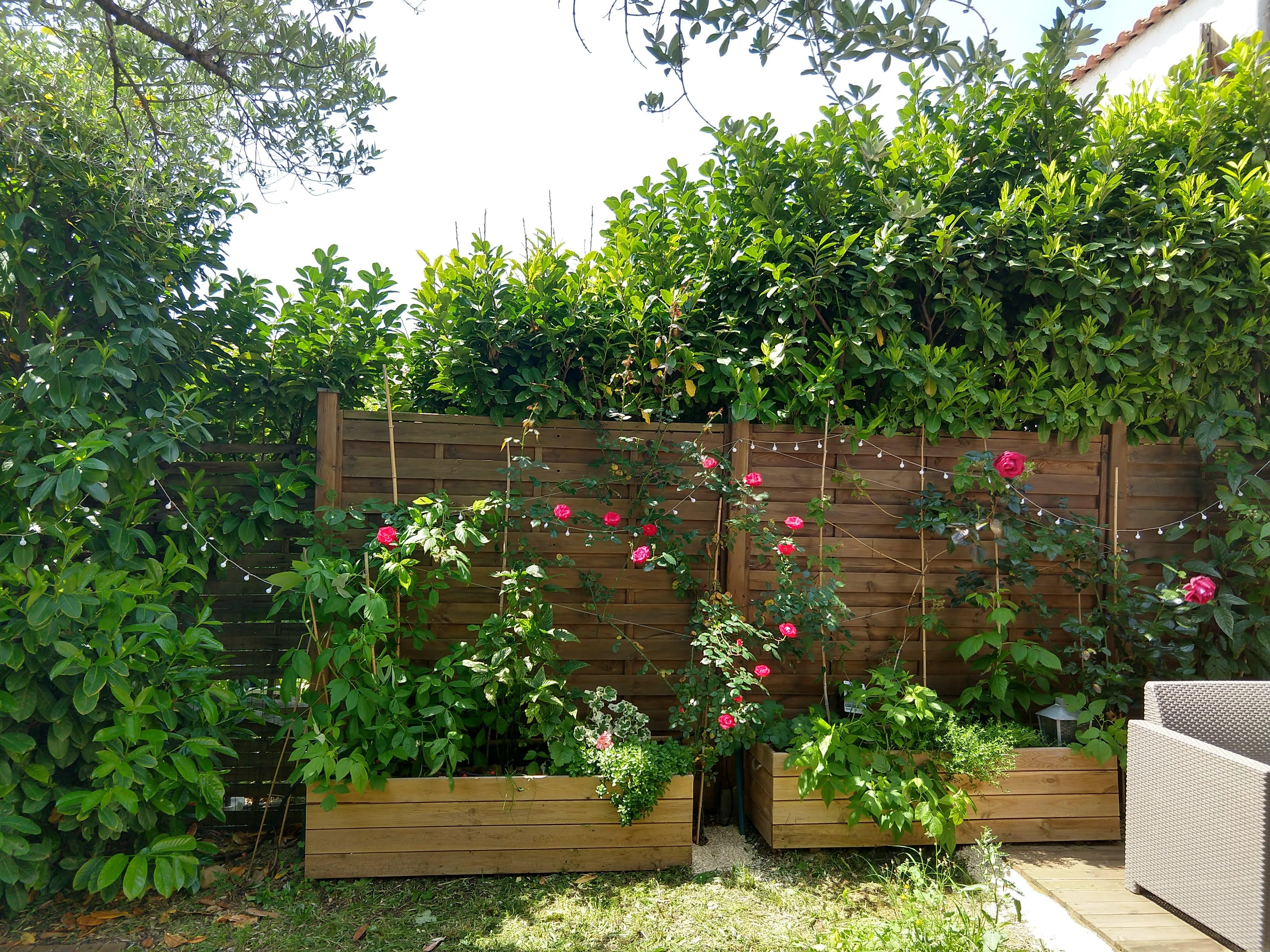1 an après : des jardinières bien fleuries et nourricières