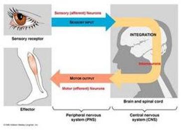 brain homework page.jpg