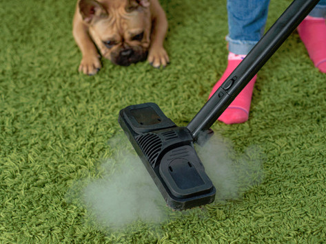 How Carpet Cleaning Can Cut Down Allergies