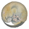 dormouse sticker.png