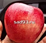 2020-05-15 17.08.06.JPG