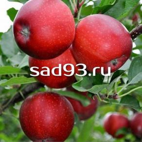 Яблоки Гала Дарк Бьюти