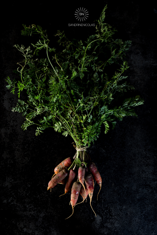 Botte de carottes rouges