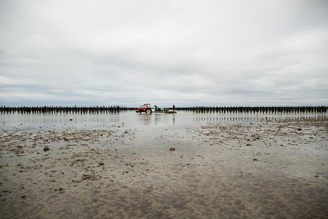 Moulières de Normandie