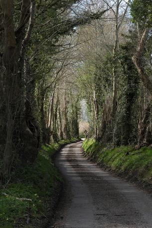 Chemin féérique