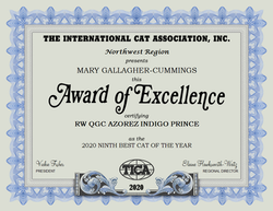 2020 NINTH BEST CAT OF THE YEAR