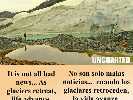 El bosque toma el lugar del Glaciar Bernal