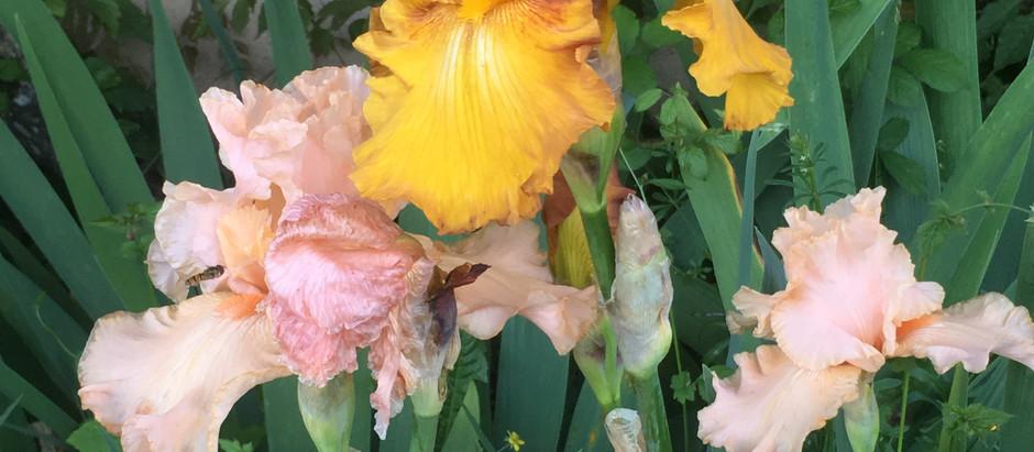 Fleurs en folie