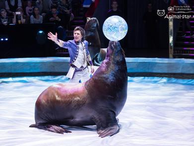 Василий Тимченко и его морские львы