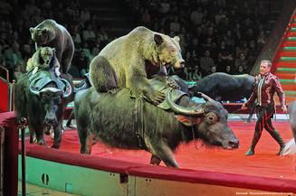 «Опять в вагон, Опять нам в путь» Московский Цирк Никулина приглашает в гости