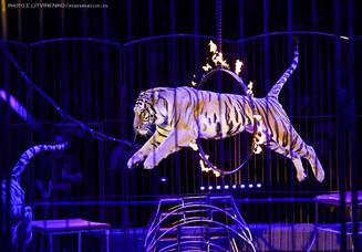 Всемирный Фестиваль циркового искусства «Идол» 2016.
