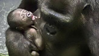 В зоопарке Москвы родился детеныш редкой гориллы