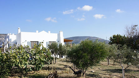 house from olives.jpg