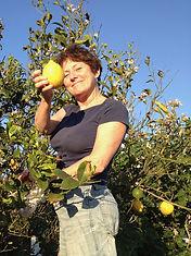 Gilly CC and her lemon tree, Kastraki Vi
