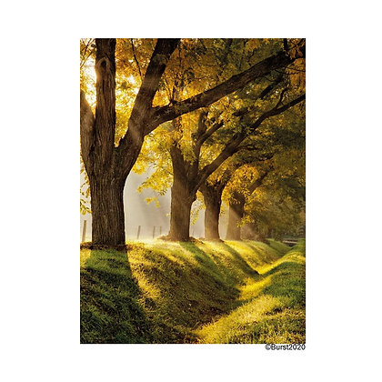 dreamland - Picture Card/ Postcard - printed on uncoated natural paper