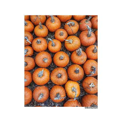 autumn flavor - Picture Card/ Postcard - printed on uncoated natural paper