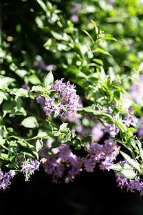 12 Flower_MG_1768.jpg