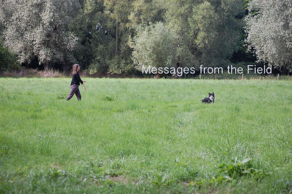 messages field copy.jpg