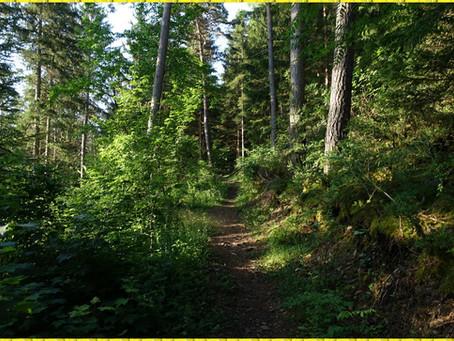 Le Chemin de Saint Guilhem #6 Dans les pentes de l'Aigoual