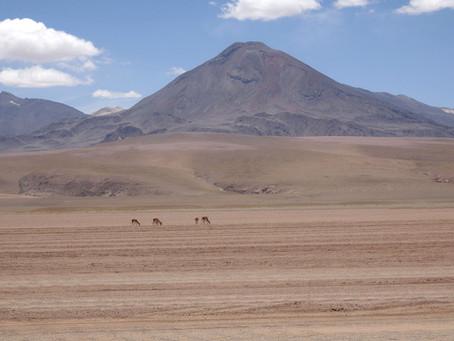 Atacama ~ Les Vigognes #1