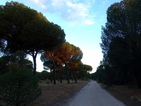 Camino de Madrid ~ J09 Alcazarén → Puente Duero