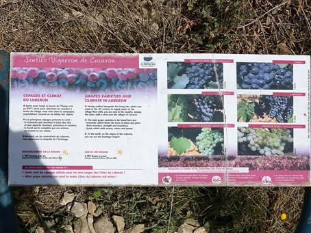 Cucuron - Le sentier des vignobles