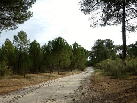 Camino de Madrid ~ J07 Nava de la Asunción → Villeguillo
