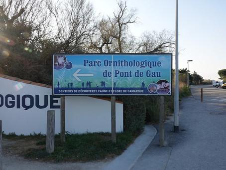 Échappée photos en Camargue #2