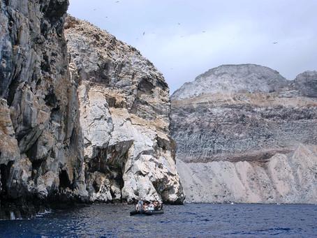 Atlantic Odissey ~ Ascension Island #2 Boatswainbird