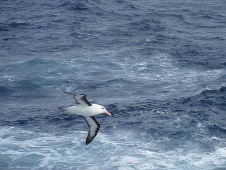 Terres Australes ~ L'île Saint Paul