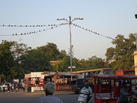 Au Rajasthan, une démente circulation #2