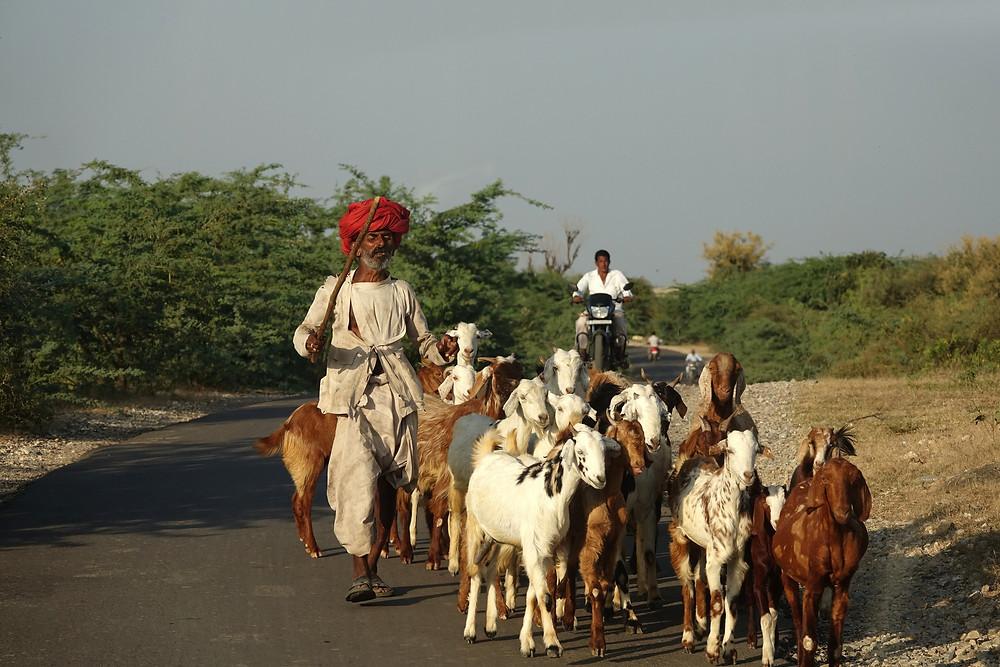 Autre rencontre sur la route de Jojawar
