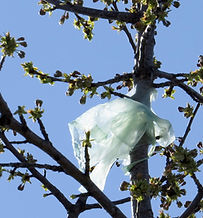 fragment-plastic-bag-stuck-tree-ecology-