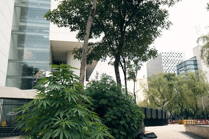 Planton-420 (24).jpg