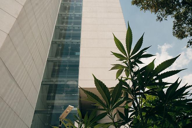 Planton-420 (31).jpg