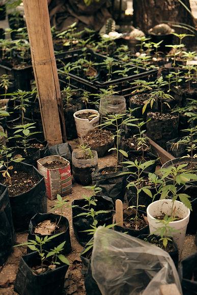 Planton-420 (10).jpg
