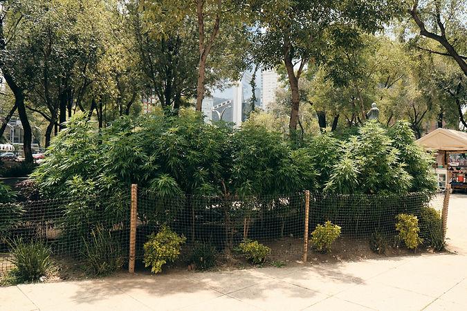 Planton-420 (16).jpg