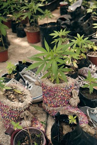 Planton-420 (12).jpg