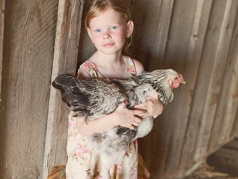Reasons to not own chickens