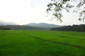 October Green