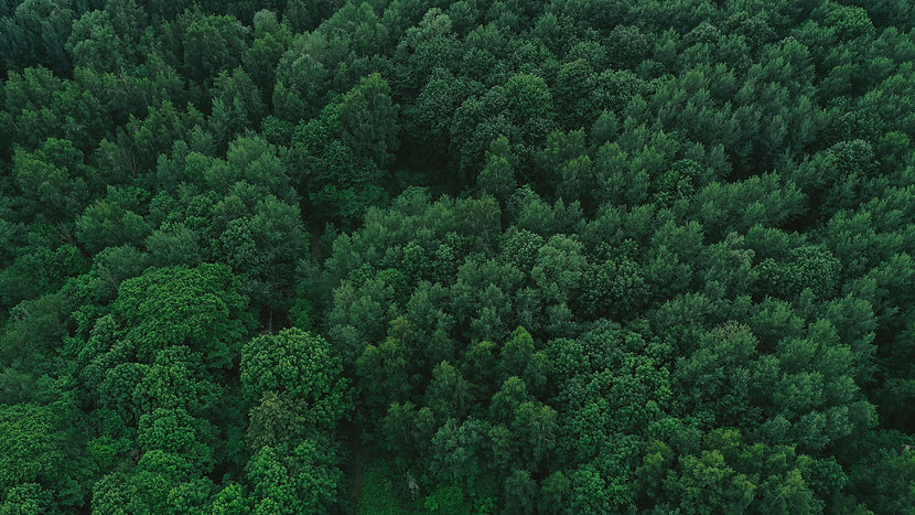 aerial-view-green-forest.jpg