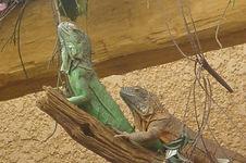 Caday Rouge at the  Aquarium