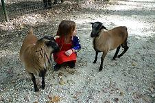 Zanimoland for children