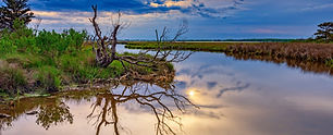 Blackwater-National-Wildlife-Refuge.jpg